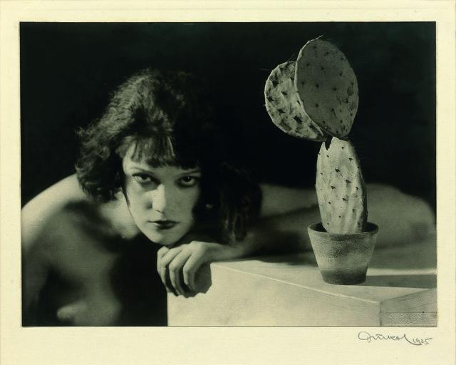 , 'Cactus,' 1925, Galerie Lefebvre