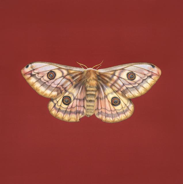 , 'Emperor Moth,' , Jonathan Cooper