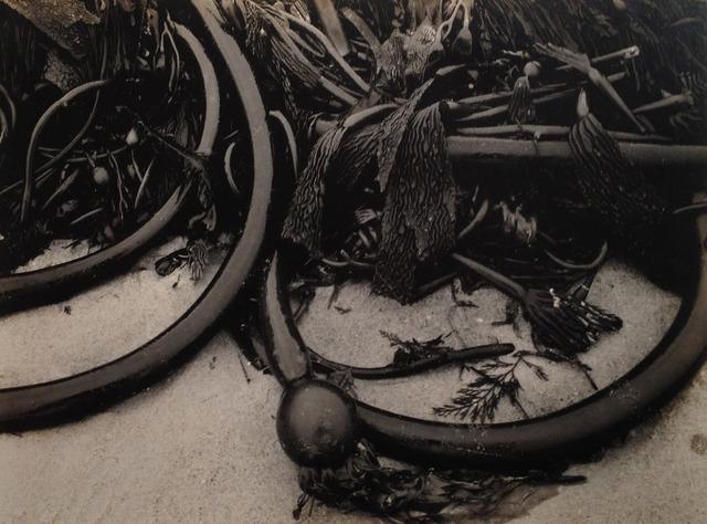 , 'Kelp, Point Lobos,' 1930, Weston Gallery