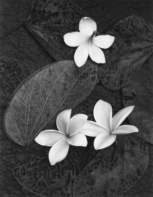 , 'Three Plumeria Blossoms,' 1994, Photography West Gallery