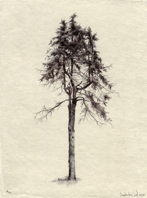 , 'Tree No. 26, September 23, 2015,' 2015, Garvey | Simon