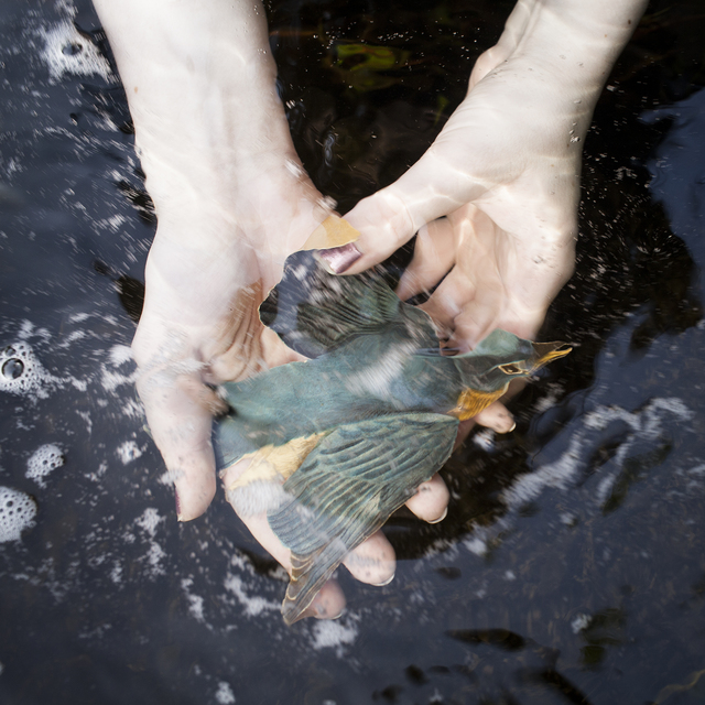 , 'The Blue Bird,' 2014, photo-eye Gallery