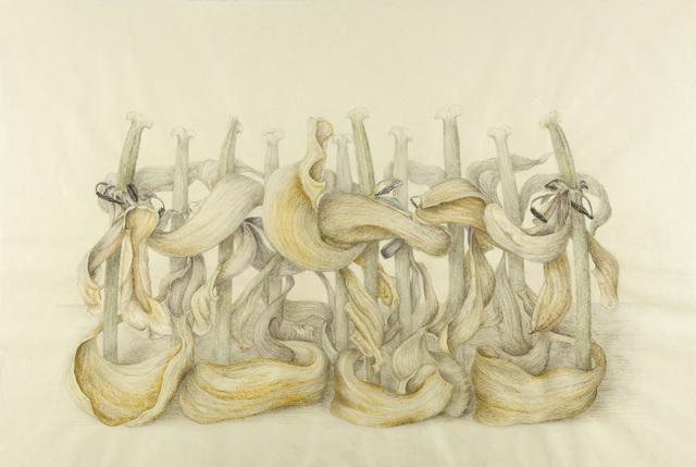 , 'El ocaso, Serie Transiciones,' 2016, Lucia Mendoza