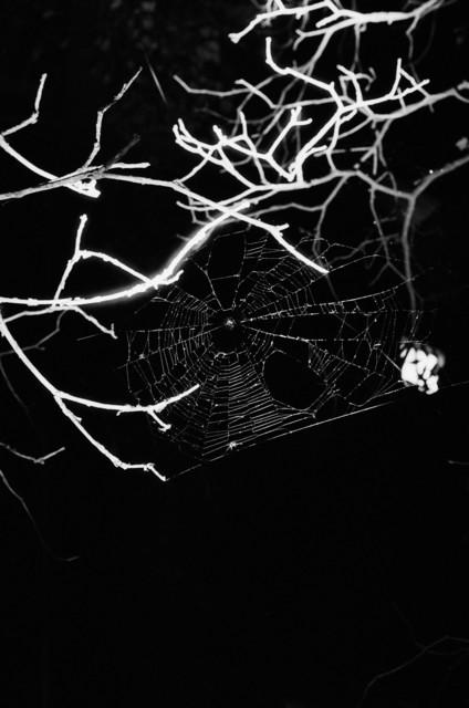 , 'Spinnennetz No.12,' 2004, Lange + Pult