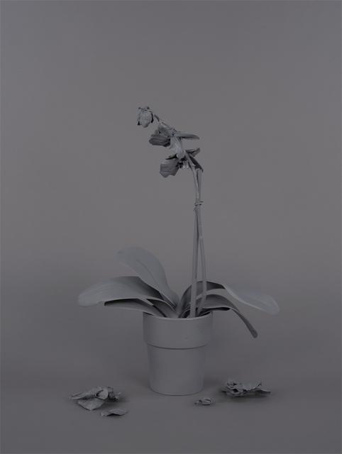 , 'Neutral Orchids (Phalaenopsis, mort),' 2016, RYAN LEE