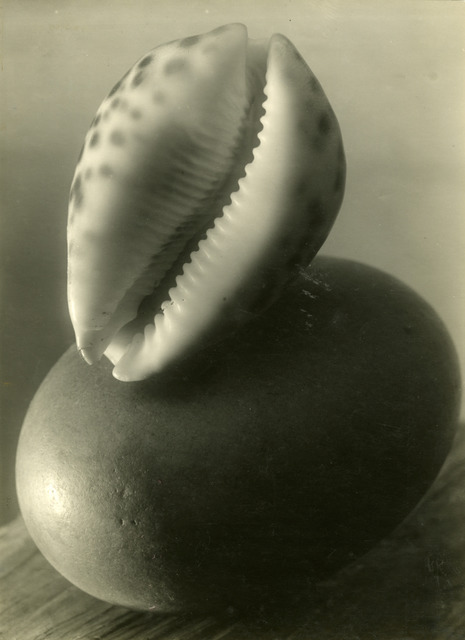 , 'Untitled (Sea shell stillife),' 1950-1954, Kicken Berlin