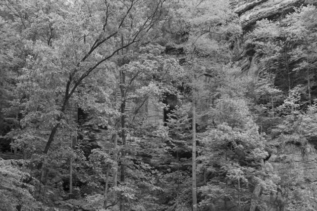 , 'Untitled #14 (Daniel Boone Forest),' 2019, Denny Dimin Gallery