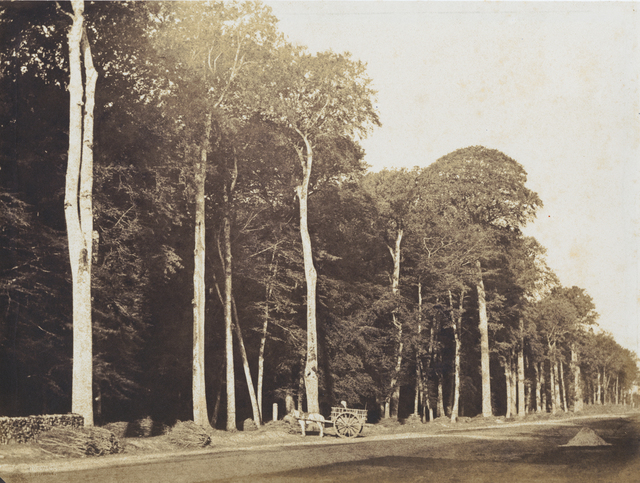 Gustave Le Gray, 'Horse and Cart, Forest of Fontainebleau', 1849c/1849c, Contemporary Works/Vintage Works