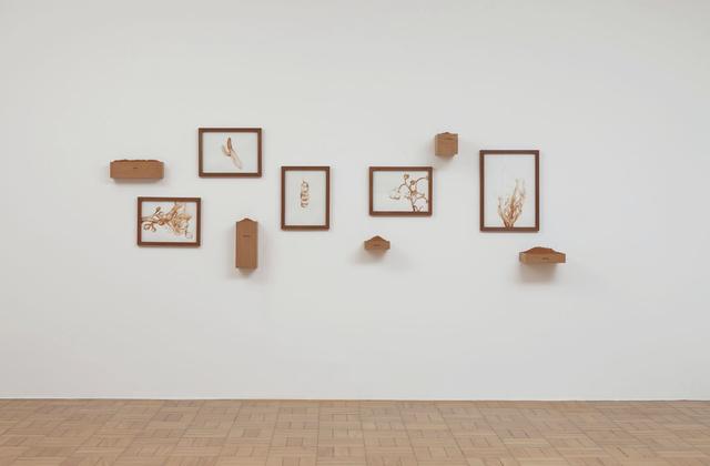 , 'Flora do Sertão ,' 2008, Galeria Nara Roesler