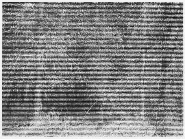 , 'Wald bei Colditz IV,' 2014, Alan Cristea Gallery