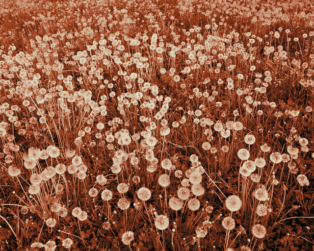 , 'Son magnifique champ de fleurs (Her beautiful field of flowers) ,' 2013, PHOTO IS:RAEL