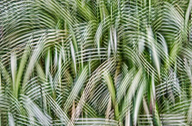 , 'Artificial View_botanical_5,' 2014, KANA KAWANISHI GALLERY