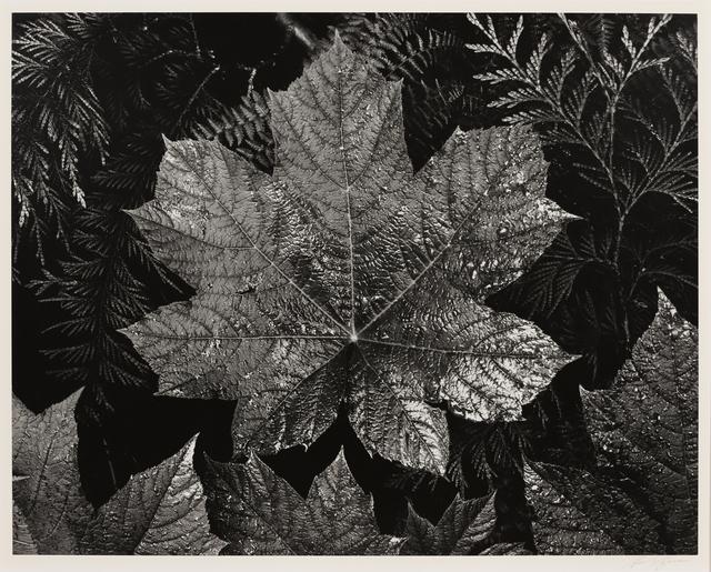 , 'Leaves, Glacier NP,' ca. 1942, Seagrave Gallery