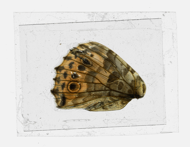 , 'Bugs Unknown VI,' 2015, CHRISTOPHE GUYE GALERIE