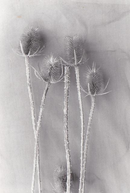 , 'Dress Making (11.8),' 1970-1990, Bowerbank Ninow