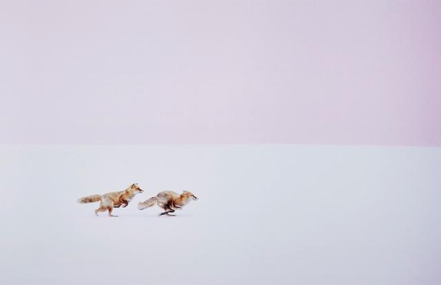 Hiroki Inoue, 'Fox Chase: Wherever you go, I will follow!', 2016, Phillips