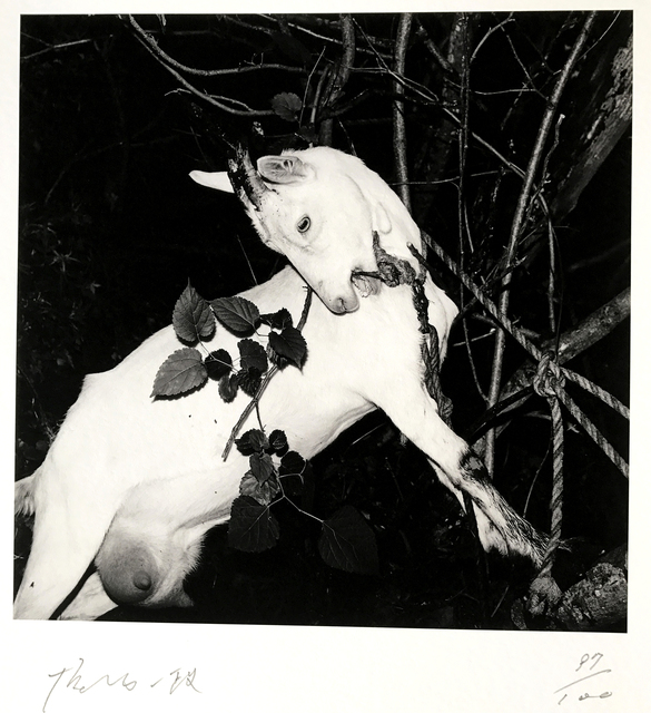 , 'Ginzan Spa, Yamagata, Fushikaden,' 1976, 99Prints