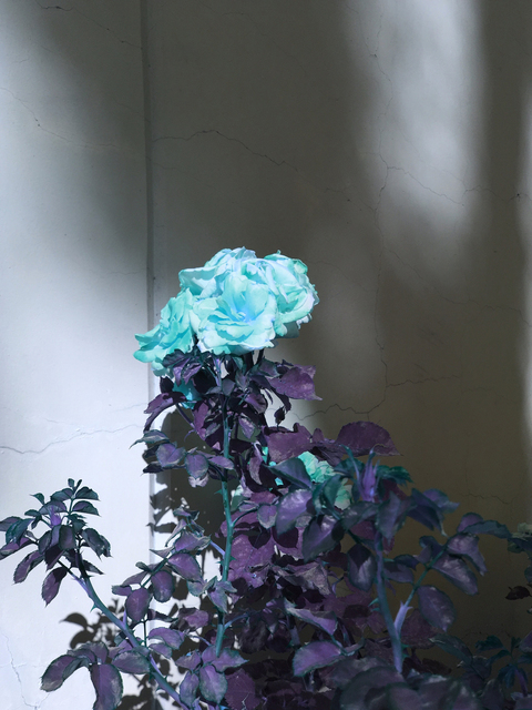 , 'Cyan Rose,' 2017, Luis De Jesus Los Angeles