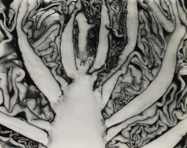 Edward Weston, 'Red Cabbage Halved', 1930, Howard Greenberg Gallery