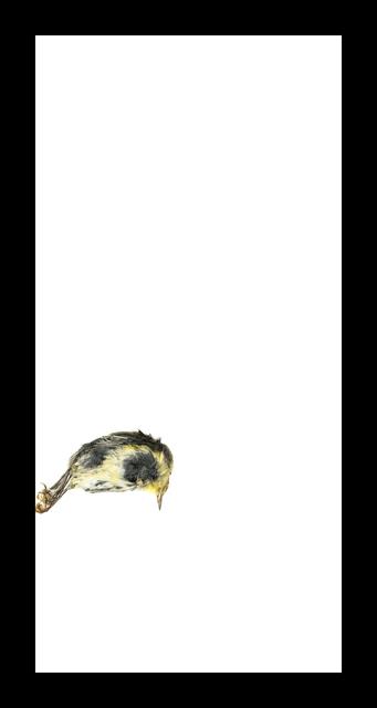 , 'Yellow Warbler,' 2017, Corkin Gallery