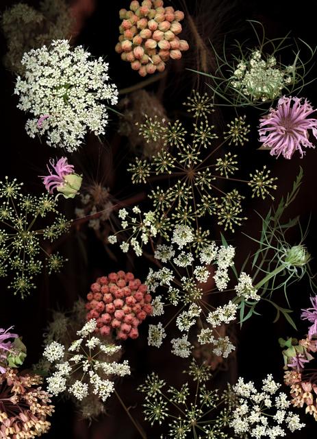 Lisa Frank, 'Milkweed Prairie Still Life (Modern Digital Flora Still Life)', 2007, Carrie Haddad Gallery