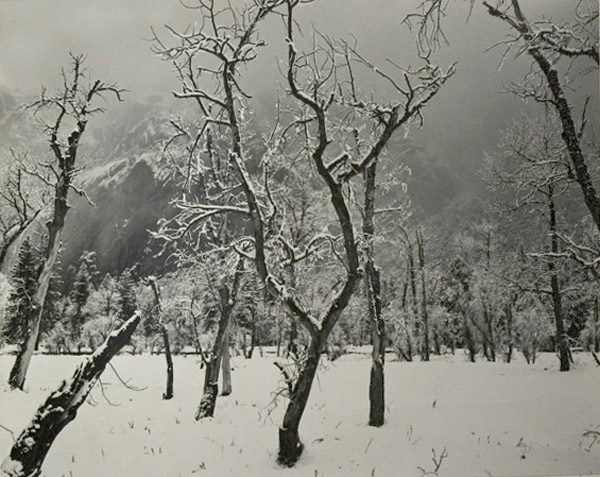 Ansel Adams, 'Trees in Snow, Yosemite National Park', 1960, Atlas Gallery