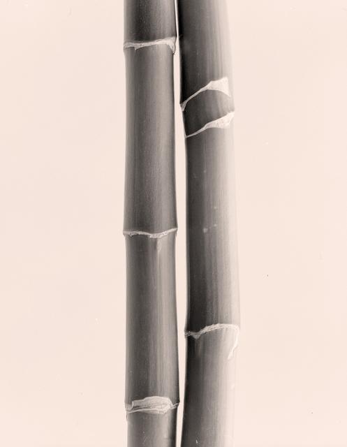 , 'Two Bamboo,' 2003, John Davis Gallery