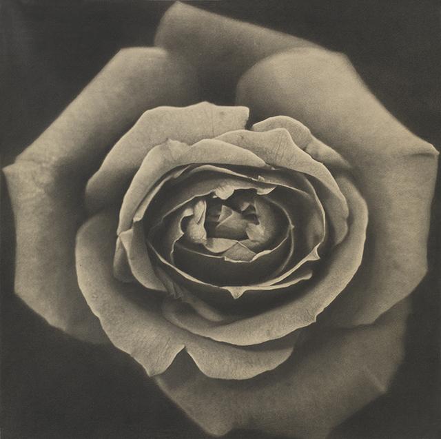 , 'Rose,' 1969, Taka Ishii Gallery