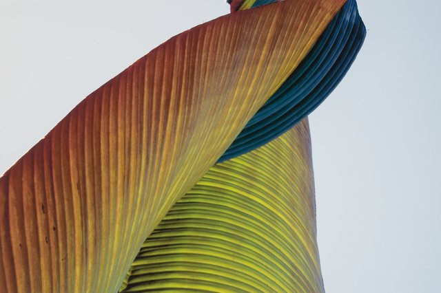 Tom Millea, 'Palm', 2006, Heritage Auctions