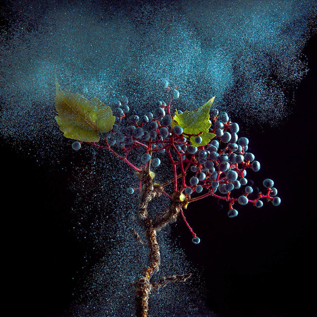 , 'Ivy Berry,' 2014, Carrie Haddad Gallery