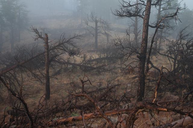 , 'Hard Season: Fire,' , Robischon Gallery