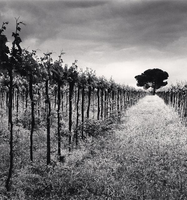 , 'Vineyard and Stone Pine Tree, Cepagatti, Abruzzo, Italy,' 2016, G. Gibson Gallery