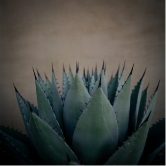 Allison V. Smith, 'Cactus. October 2011. Marfa, Texas', 2013, Barry Whistler Gallery