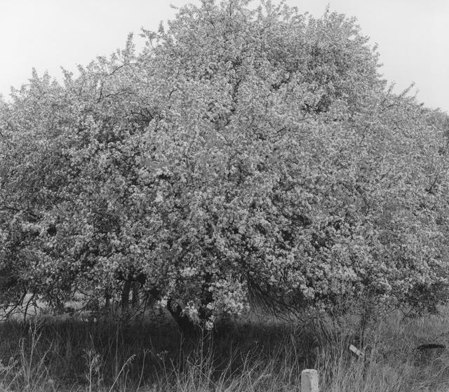 , '百花树 Trees with Hundreds of Flowers,' 2017, C14 Gallery