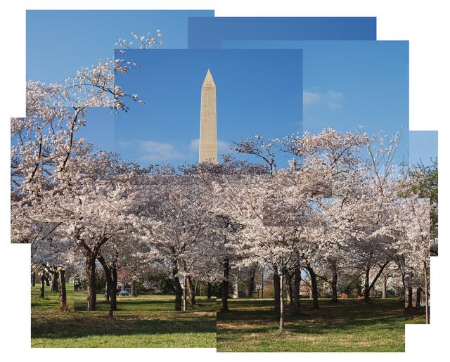 Jason Horowitz, 'Cherry Blossoms, Washington, DC', 2004, Curator's Office
