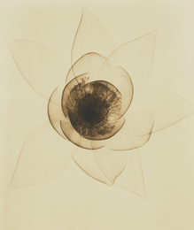Dr. Dain Tasker, 'Wide Open Lotus,' 1935, Phillips: The Odyssey of Collecting
