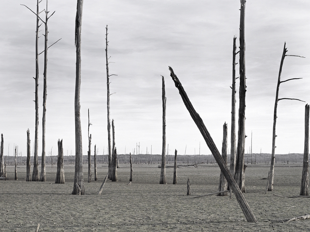, 'Origines IV,' 2017, Galería Juana de Aizpuru