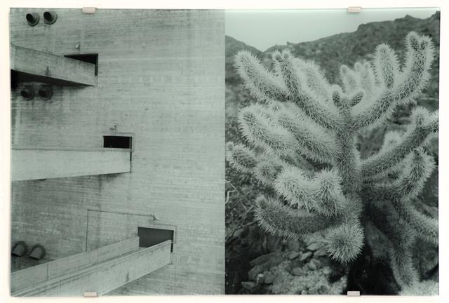 , 'Sesc Pompeia, Cylindropuntia Fulgida,' 2016, Christopher Grimes Projects