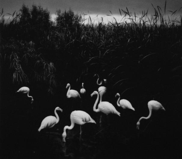 Pentti Sammallahti, 'Mt. Etio, Namibia (Flamingos)', 2005, Peter Fetterman Gallery