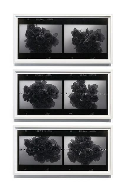 Leung Chi Wo 梁志和, 'Untitled (Roses)', 2015, Blindspot Gallery
