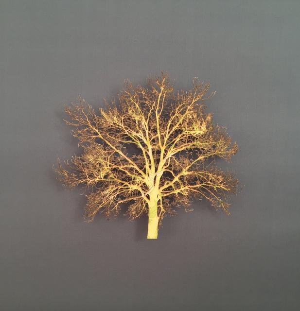 , 'Oak Tree 2,' 2015, Serena Morton