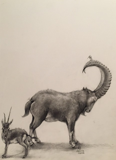 Adonna Khare, 'Goat and Impala', 2018, M.A. Doran Gallery