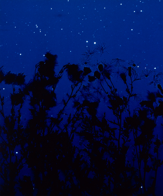 Susan Derges, 'Starfield Thistle II', 2004, Ingleby Gallery