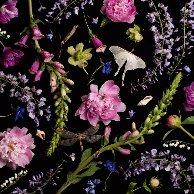 , 'Botanical V (Peonies and Wisteria),' 2013, Robert Klein Gallery