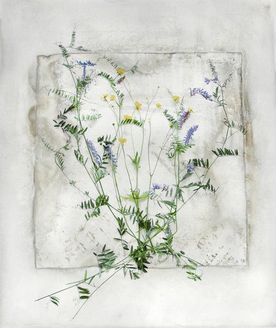 , 'Buttercup and Vetch,' 2018, Schmidt Dean Gallery