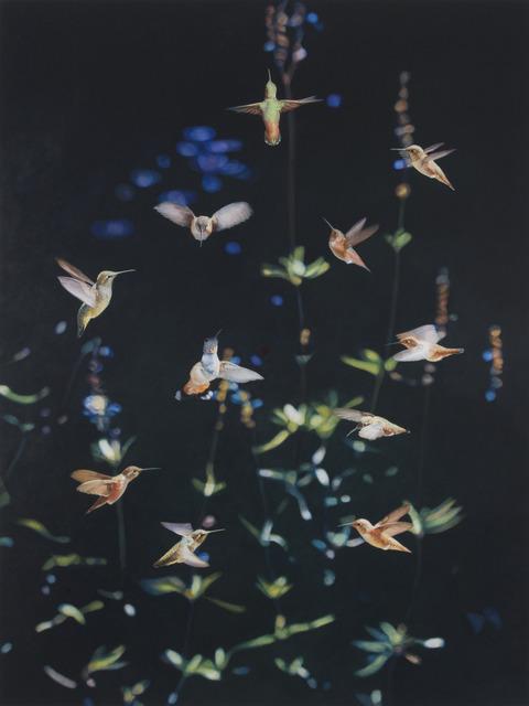 , 'Flight I,' 2015, Rena Bransten Gallery