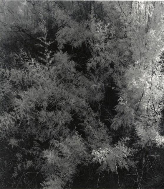 , 'Moab, Utah,' 1994, Laurence Miller Gallery