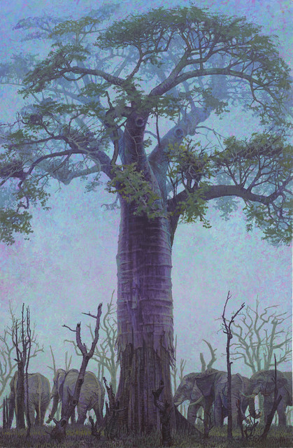 , 'Baobab with Elephants, South Luangwa, Zambia,' 2017, John Martin Gallery