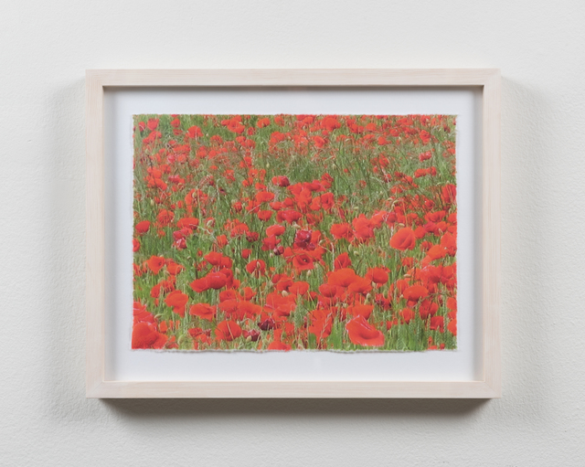 , 'Poppies #6,' 2015, Martin Asbæk Gallery