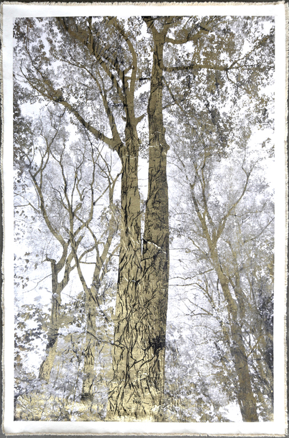 Bill Claps, 'Majestic Oak II', 2015, Laurent Marthaler Contemporary